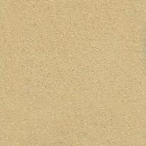 905 – Lichen
